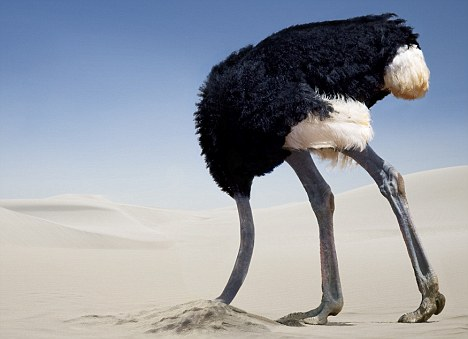 http://www.carolsadventures.com/wp-content/uploads/2013/10/ostrich-in-the-sand.jpg