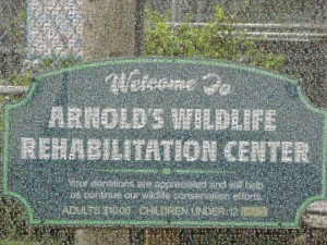Arnolds Wildlife