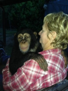 Sue with chimp