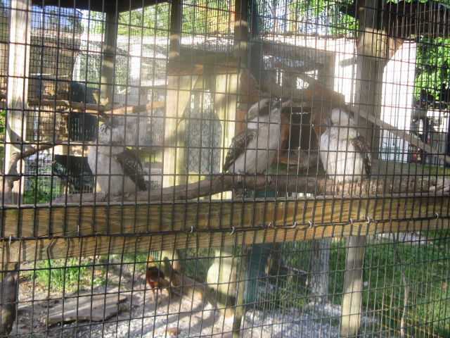 how to become a wildlife rehabilitator in florida
