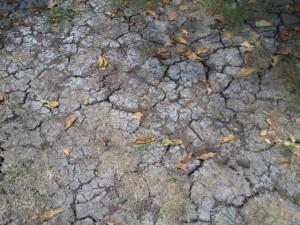 dry yard